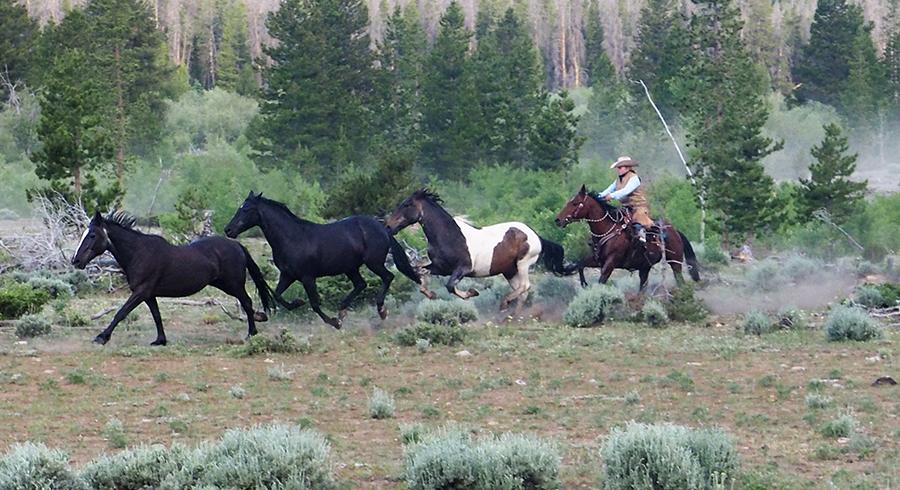 Rawah Ranch Western Dude Ranch Family Dude Ranch Colorado